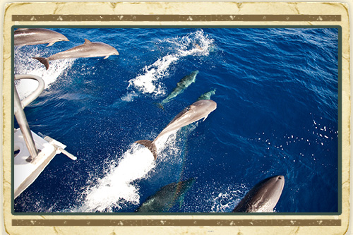 Dolphin & Whale Watching Experience
